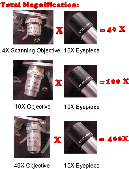 Optical microscope - Wikipedia, the free encyclopedia