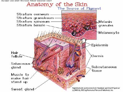 skin.htm