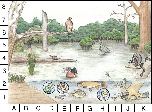 Wetlands homework