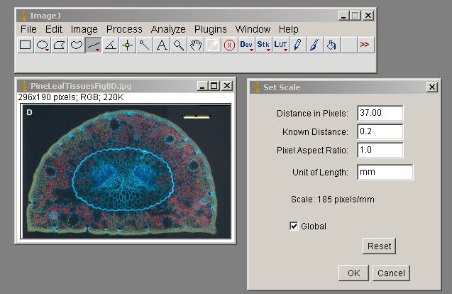 Brief Instructions for ImageJ
