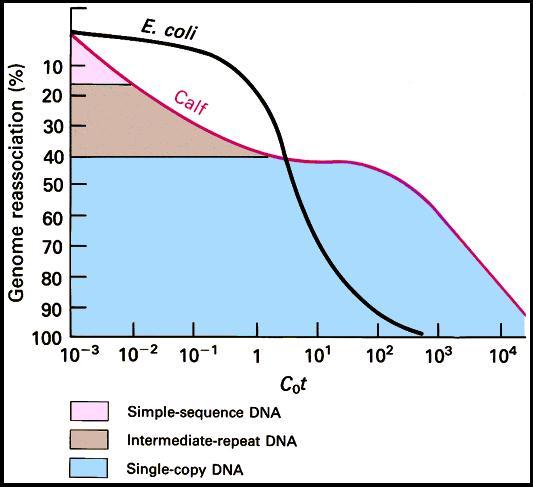 Cot curve