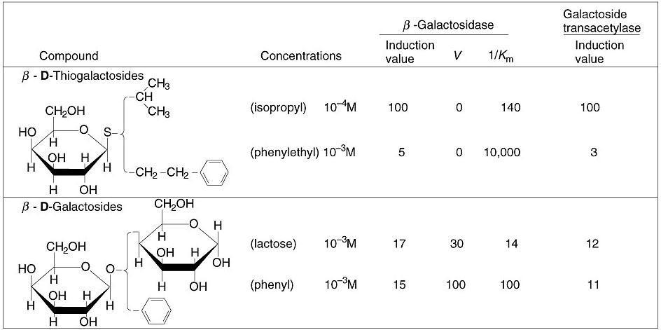 Beta Galactosidase